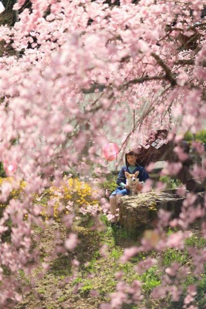 しだれ桜の下、いっしょに