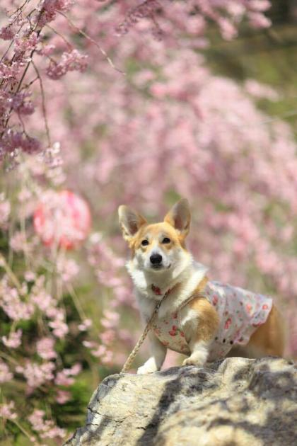 枝垂れ桜の下で真顔~