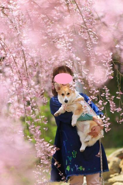 しだれ桜の下、抱っこ2