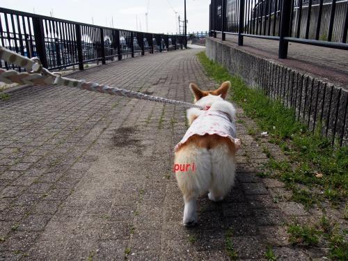 お散歩ぷりぷり