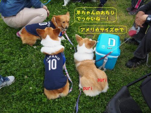 尻デカ芹ちゃん