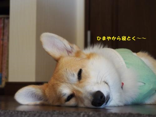 疲れてねてもた