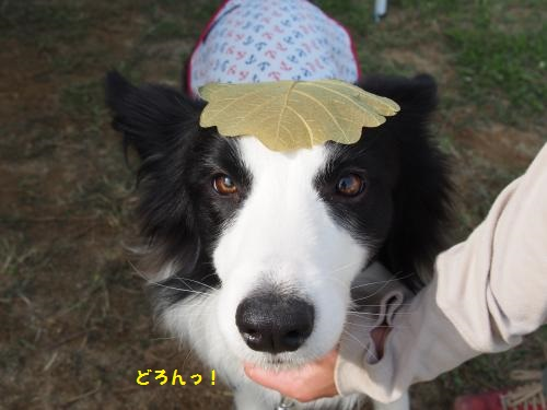 さらちゃんと葉っぱ