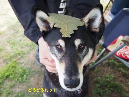 あきくんと葉っぱ