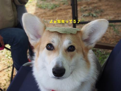 芹ちゃんと葉っぱ