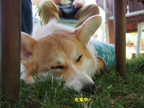 疲れて寝るコ
