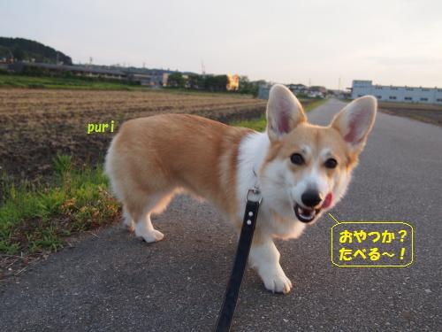 お散歩にて ぺろ