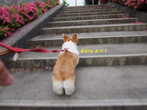 階段、ためて