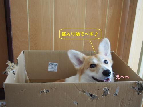 箱入り娘でーす