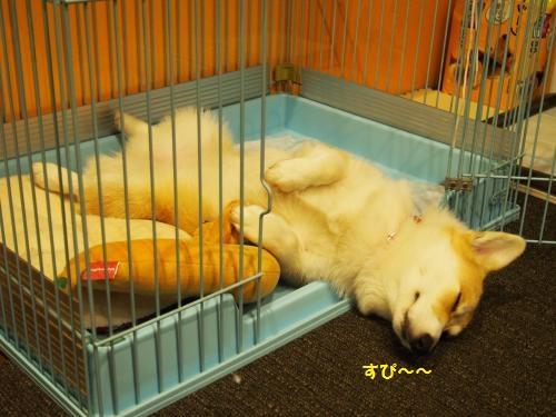 サークルで寝るわ