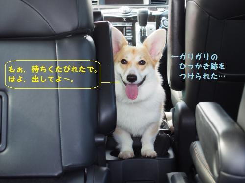 はよ、車からだしてよー