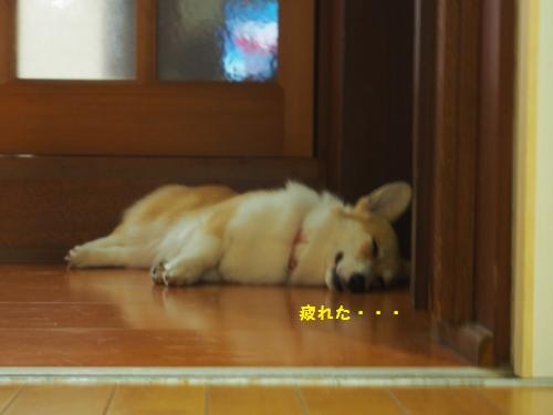 廊下で熟睡
