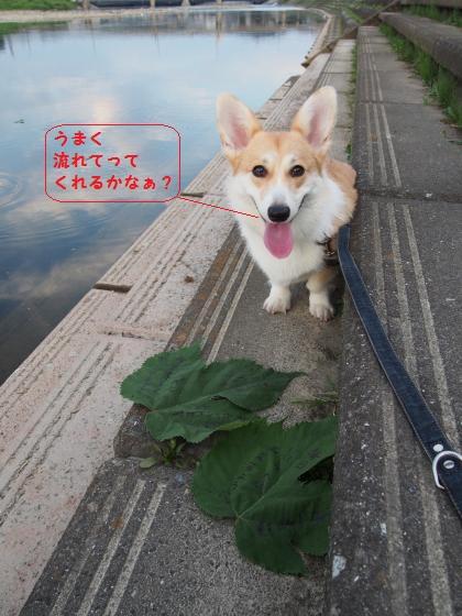 河川敷の芹ちゃん