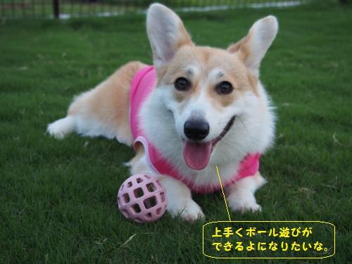 ボール遊びできるかな?
