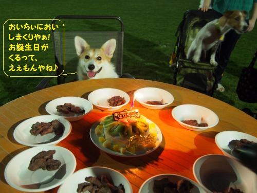 ケーキと鹿肉とパチリ