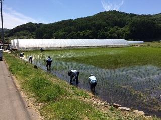農業体験201606010103