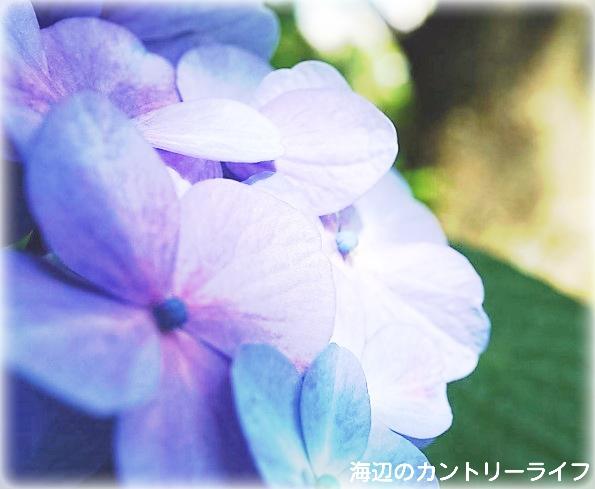 20160627014415dfa.jpg