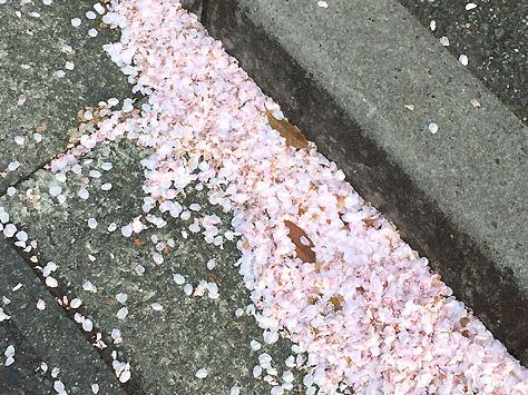 道には花弁が
