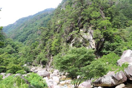 金渓館 からの眺め  渓谷 (1)