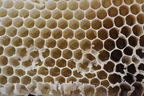 昇仙峡森の駅 ハチの巣 本物 触らないでね