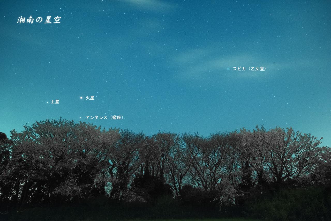 20160406_星と桜A.jpg