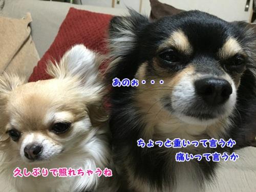 IMG_8992-2.jpg