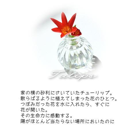 2016418hana2.jpg