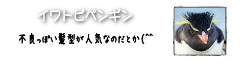 2016502iwatobi.jpg
