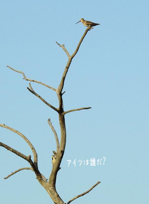 2016531akaooji2.jpg
