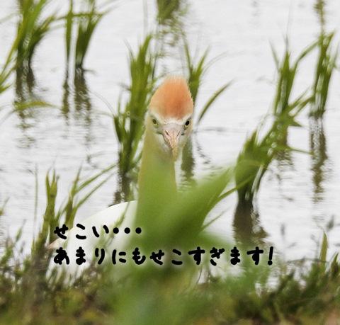 2016617amasagi6.jpg
