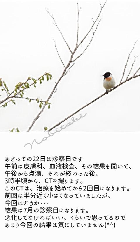 2016620nobitaki.jpg