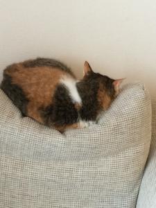 ソファーの使い方を間違えている猫
