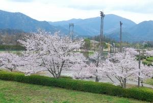 瀬野川公園の桜並木