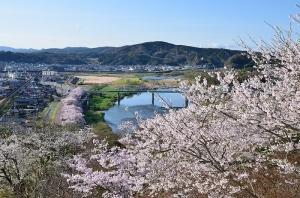 尾関山公園展望台と桜