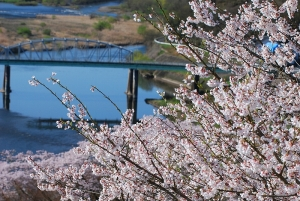 祝橋と桜の木