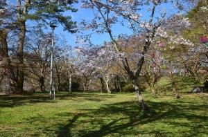 因幡台と桜の木