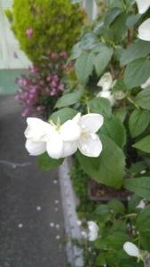 thumbnail_1463786878054.jpg