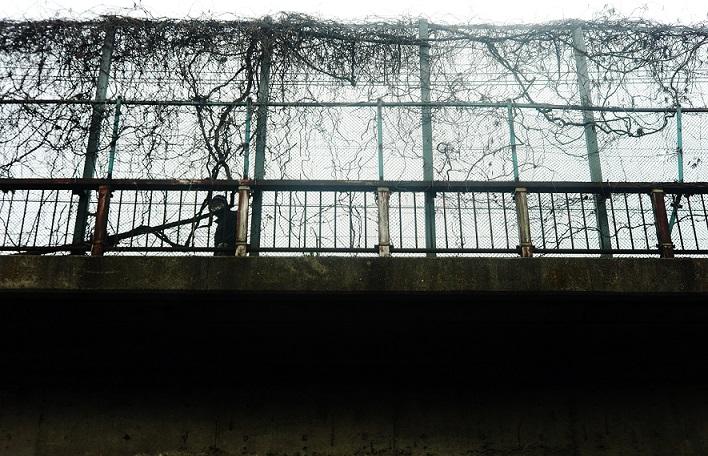 フリー画像男とつたの金網