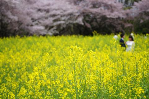 haru_urara_1604_3.jpg