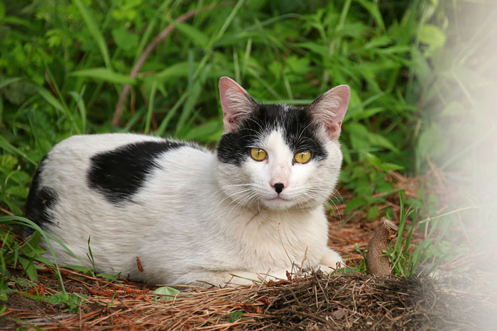 cat-1605#001_001