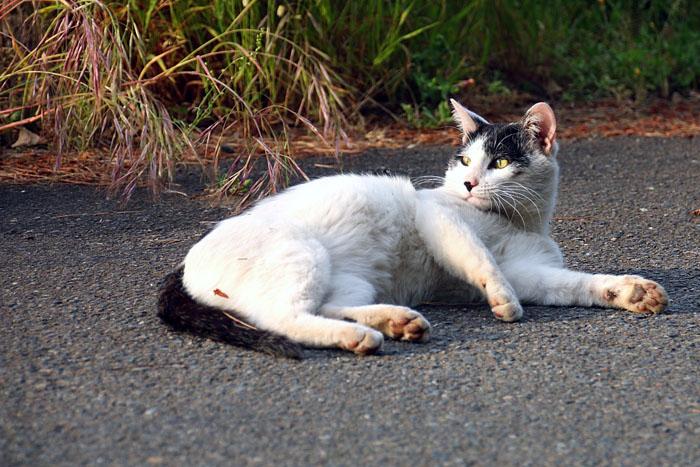 cat-1605#001_004