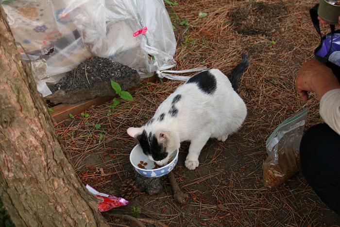 cat-1605#001_002
