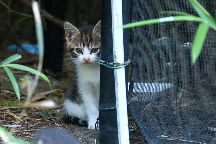 Kitten1605_001.jpg