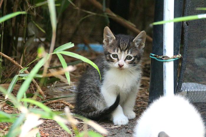 Kitten1605_002.jpg
