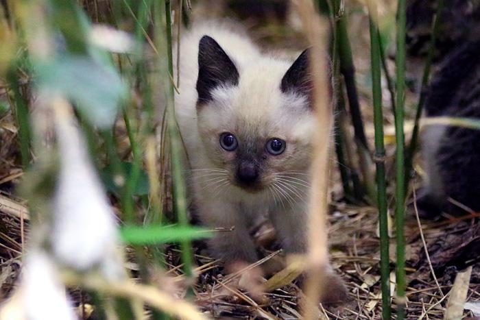 Kitten1605_005.jpg