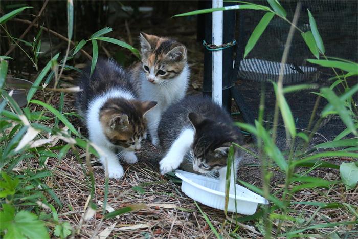 Kitten1605_007.jpg