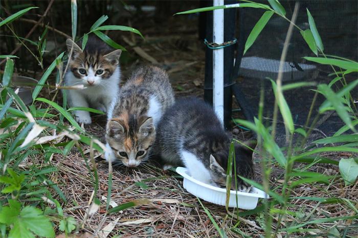 Kitten1605_008.jpg