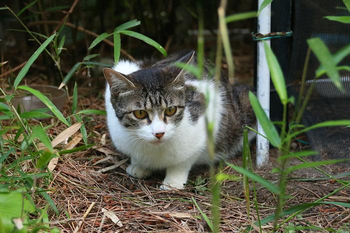 Kitten1605_010.jpg