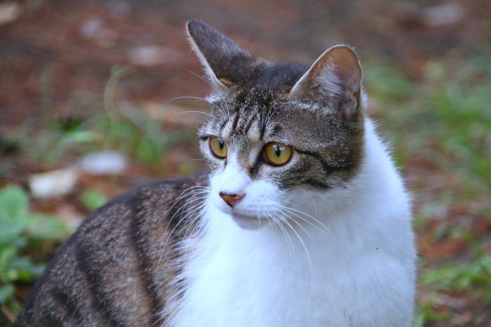 Kitten1605_013.jpg