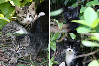kitten012c.jpg